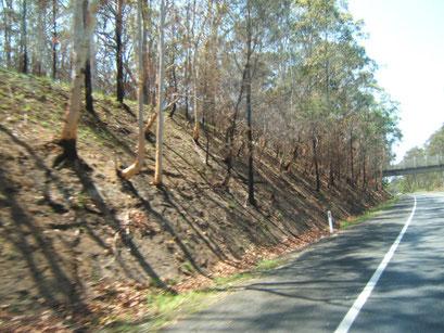 narben vom buschbrand