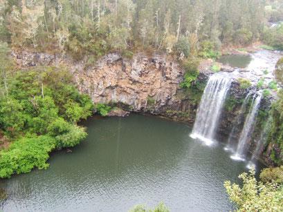 Dangar Falls - Dorrigo