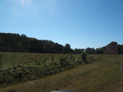 auf dem weg zum Dorrigo National Park