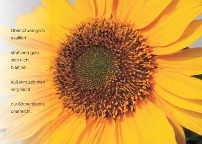 OVLK06103 Sonnenblume