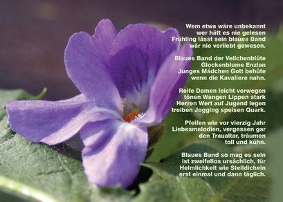 OVLK06108 Veilchenblüte