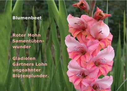 OVLK06109 Blumenbeet