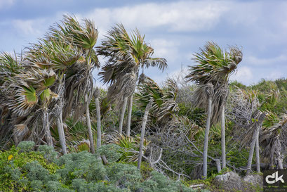 Palmenwald an der Ostküste