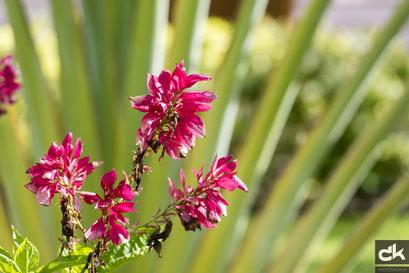 Pflanzen auf Harvest Caye