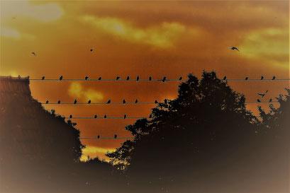 Ingrid A. - MoFo Die Vögel