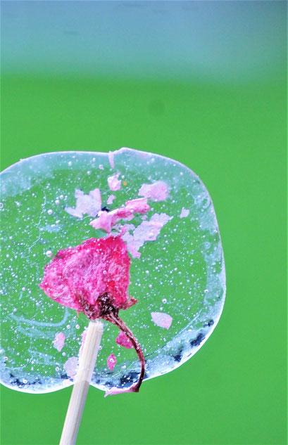 八重桜の塩漬けで塩飴を作ってみました(講座とは別の日です)