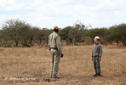 Approche à pied d'un troupeau de zèbres - Umlani, Timbavati - Afrique du Sud août 2006
