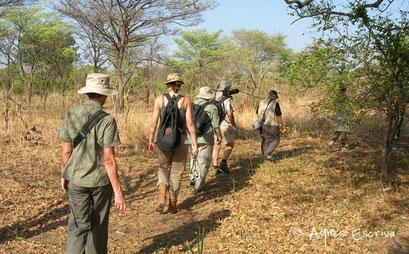 Safari à pied - South Luangwa - Zambie nov 2005