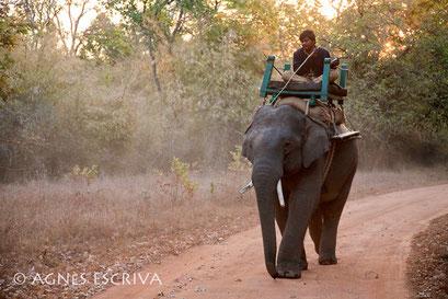 Un mahout et sa monture - Bandhavgarh, février 2010