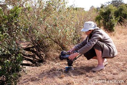 Mother, Masaï Mara août 2010
