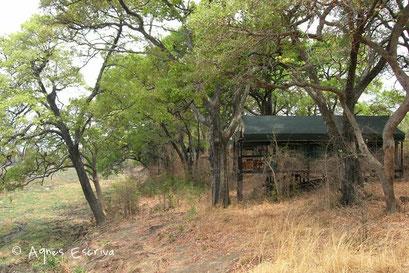 Camp de Chindeni - South Luangwa - Zambie nov 2005