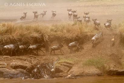 Crossing meurtrier - Kenya août 2010