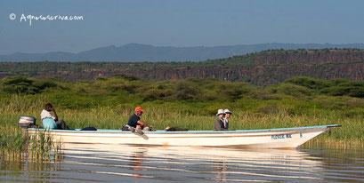 Lac Baringo, Kenya, décembre 2011