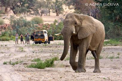 Damaraland, Namibie - août 2008