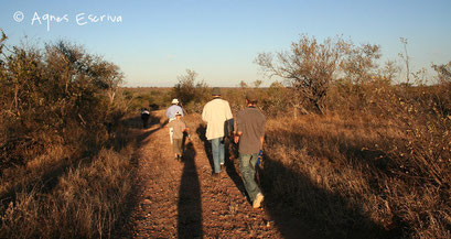 Balade à pied - Umlani, Timbavati - Afrique du Sud août 2006