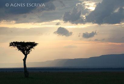 L'acacia -Kenya février 2007