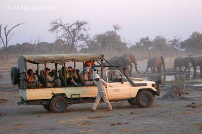 Eléphants au coucher de soleil, Botswana 2007