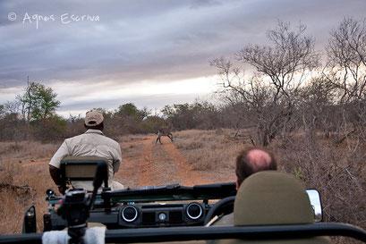 Timbavati  - Afrique du Sud, octobre 2010