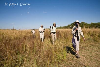 Walking safari à South Luangwa - Zambie mai 2009