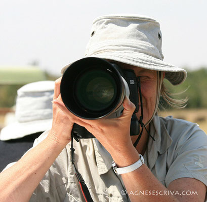 Masaï Mara, août 2009