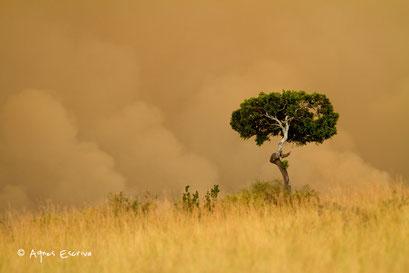Masaï Mara, juillet 2012