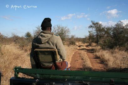 Le pisteur - Timbavati - Afrique du Sud août 2006