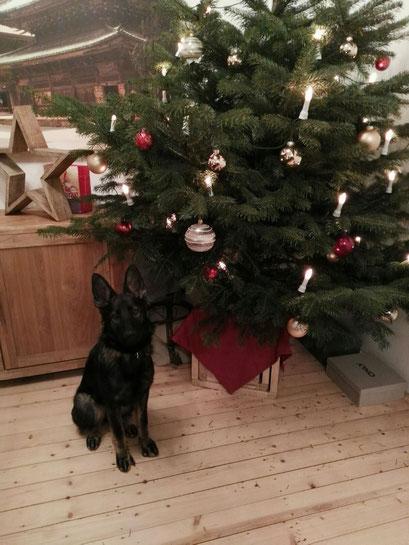 Carlotta Weihnachtsgrüße