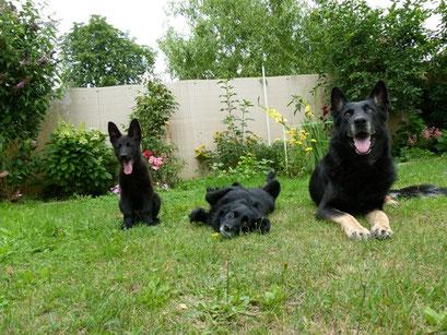 Baxter, Willi, Yoschy