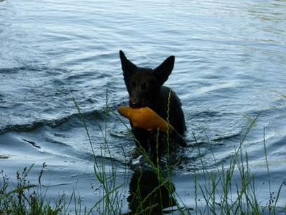 Baxter rettet Schnabeltier
