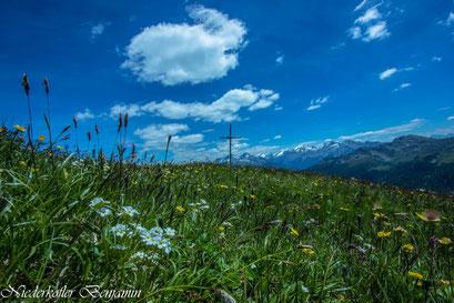 Die Alpenflora im Tauferer Ahrntal in der Ferienregion Kronplatz im Pustertal
