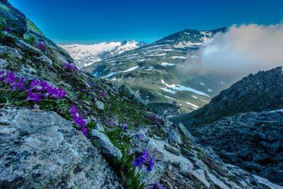 Frühling in den Ahrntaler Bergen