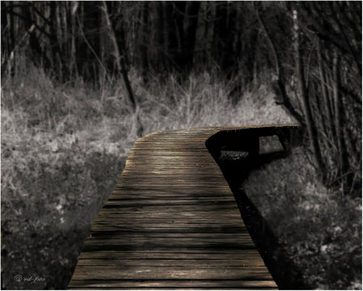 Steg im Moor