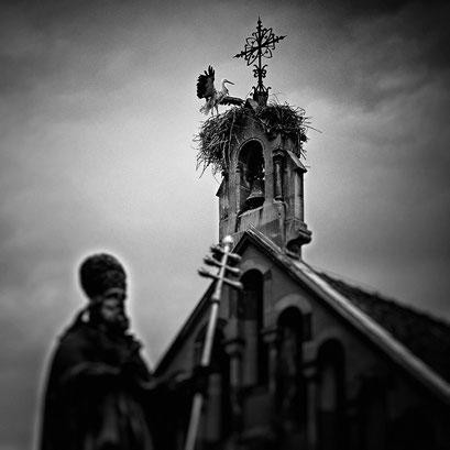 Eguisheim, Cigogne et Église. Elsass. France 2015