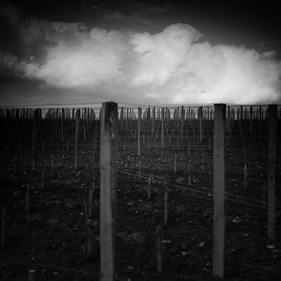 Saint-Émilion & vignes #03, Aquitaine, France 2013