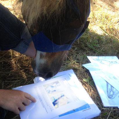 Der neugierige 'Herr Pony Goliath' - so fleißige Schüler kann man sich nur wünschen!