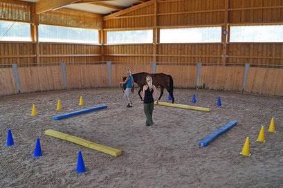 Tolle Trainingsbedingungen im überdachten Roundpen