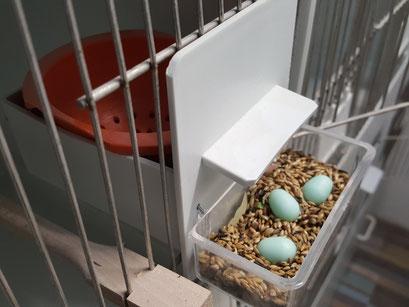 Die Ei-Aufbewahrung