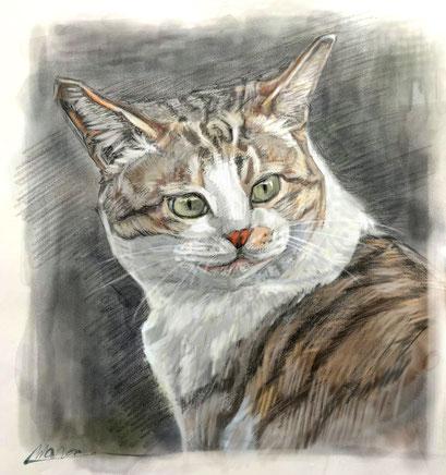 動物デッサン作画後に着彩