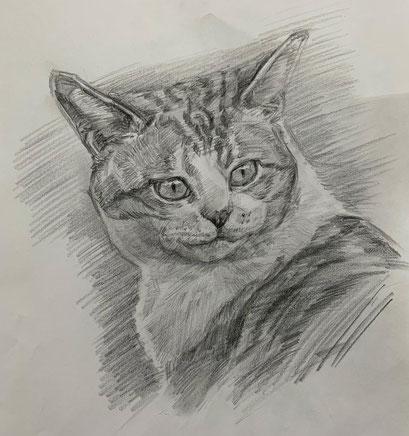 猫の肖像画動物デッサン動物画1