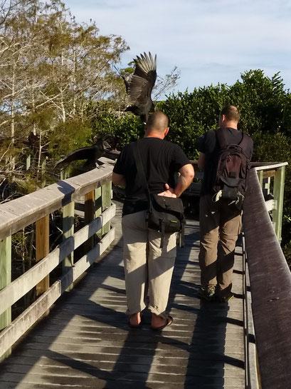 Die lassen sich von Besuchern nicht stören.... - Everglades