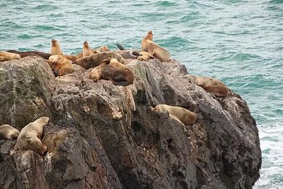 Cabo Blanco - Seelöwenkolonie