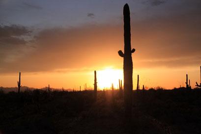 Saguaros N.P., Arizona