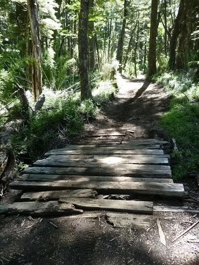 ... über diese Brücke!? - Villarica N.P.