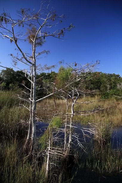 Everglades National Park, FL, USA
