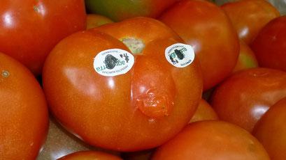 Tomato de Concepcion - hier haben alle eine Nase...