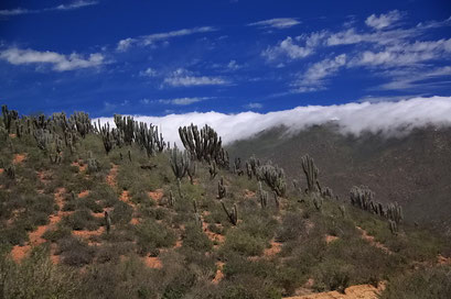Wo die Feuchtigkeit des Meeres kondensiert - der Fray Jorge National Park