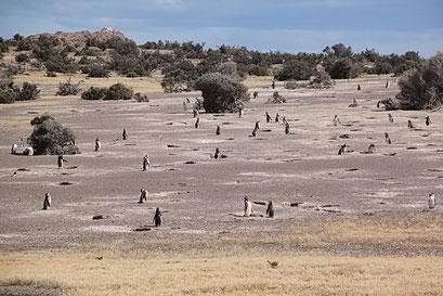 Cabo Tombo N.P. - mehr als 250'000 Vögel leben hier