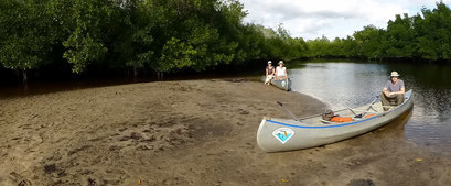 Mangroven Wälder - Collier-Seminole
