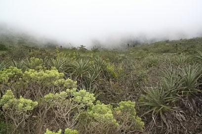 Regenwald in der Wüste - der Fray Jorge National Park