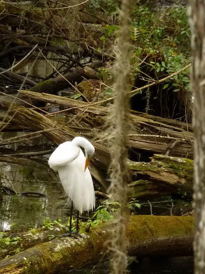 Big Cypress National Preserve, FL, USA